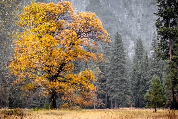 Baum, Herbst, Yosemite National Park_DSCF5862_1024