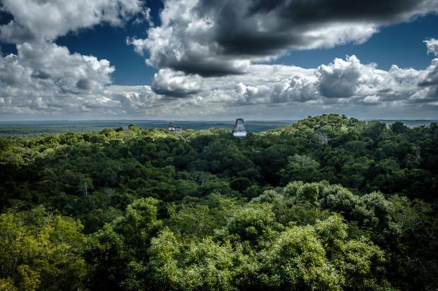 Guatemala, Sunrise Tour, Temple IV, Tikal, Urwald_Tikal_DSCF8047_1180_1180