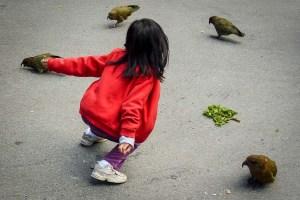 Kea, Neuseeland, spielendes Kind_P1030674_1180