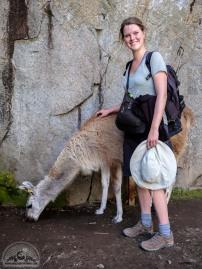 Lamas sind geländegängig: alle Nase lang trifft man auf eines der zotteligen Andenbewohner.