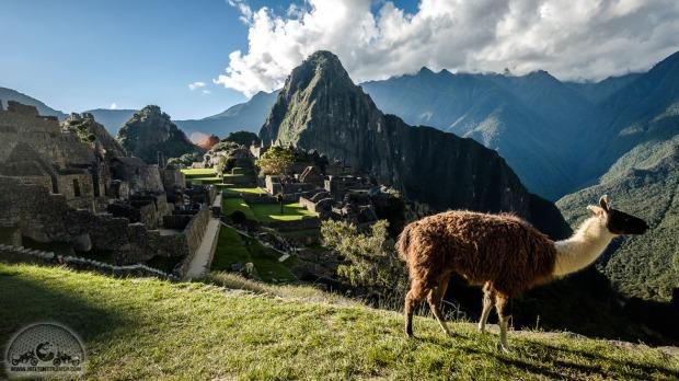 Anden, Fuji XT20, Llama, Machu Picchu, Motorradweltreise, Peru_DSCF0945_1180